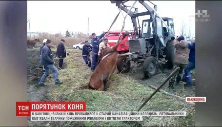 На Львівщині кінь задніми ногами провалився у зарослий каналізаційний люк