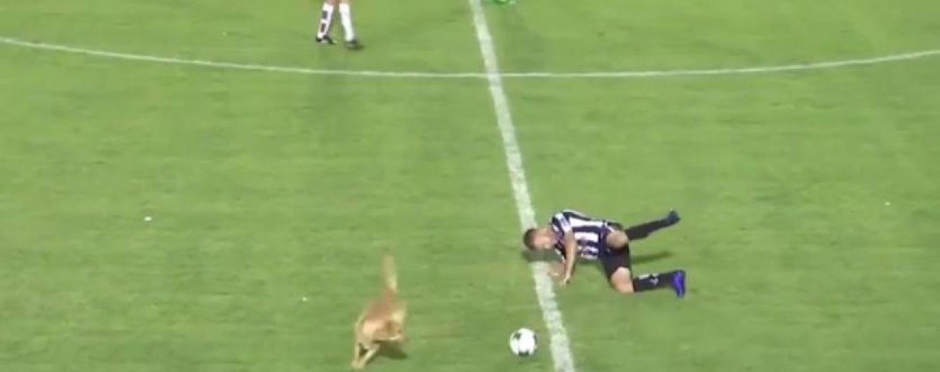 Собака під час матчу сфолив проти футболіста і відібрав у нього м'яч