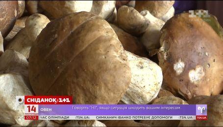 Украина экспортировала почти 300 тонн грибов - экономические новости