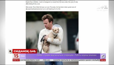 Папарацци подловили Юэна Макгрегора на прогулке с больной собачкой