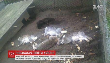 Возвращение чупакабры: на Львовщине неизвестный зверь разорвал почти полсотни кроликов