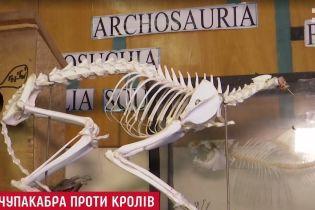На Львівщині надумали робити масштабну лісову облаву на чупакабру