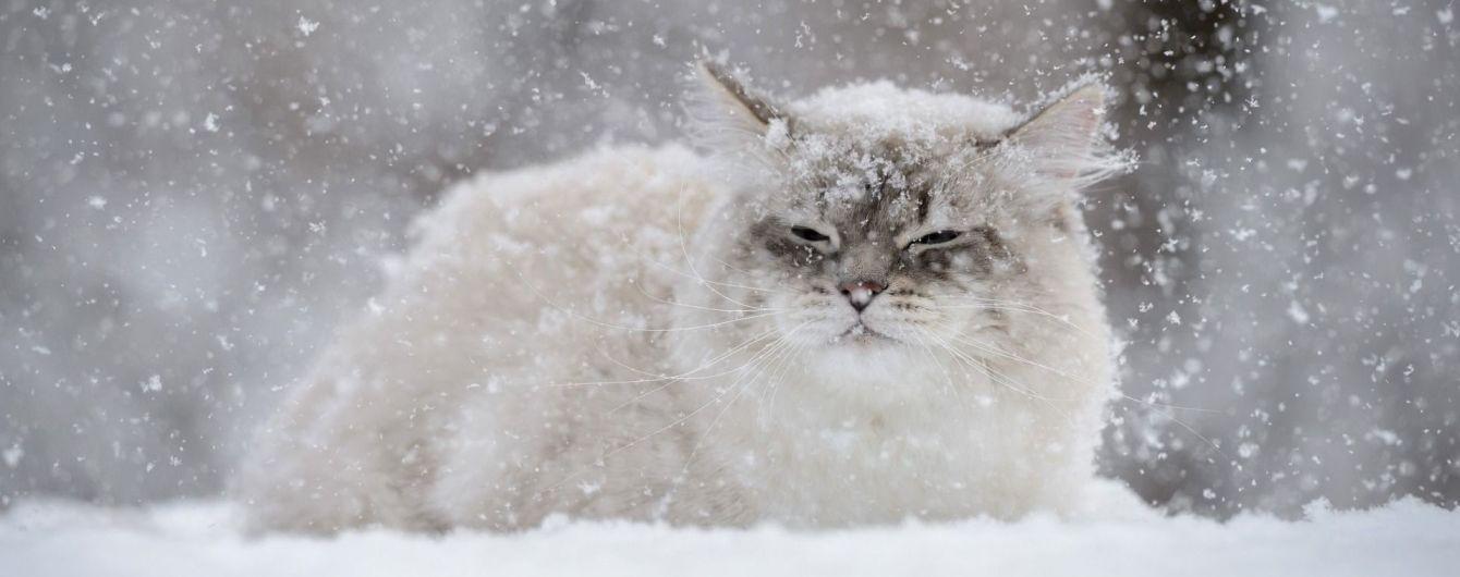 Какой будет погода зимой: климатологи и народные синоптики дают кардинально разные прогнозы