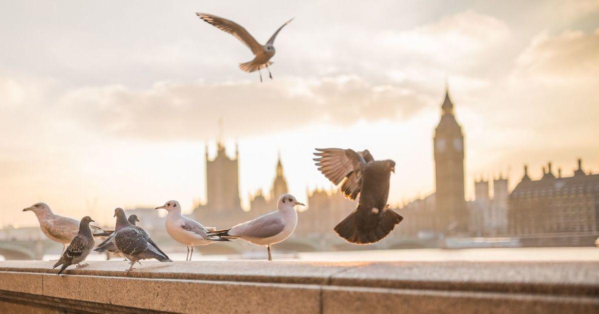 Билеты от 30 евро: Wizz Air начнет летать в следующем году со Львова в Лондон