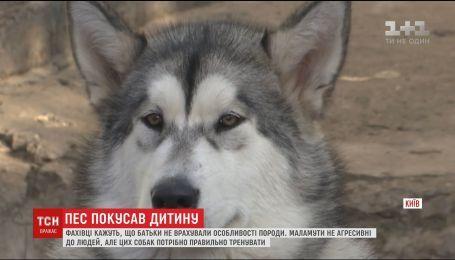 На Кировоградщине домашний пес напал на 7-летнего мальчика