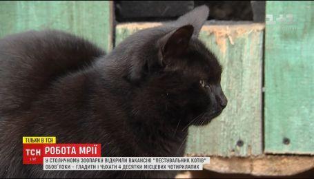 Зоопарк запрошує на роботу пестувальника котів