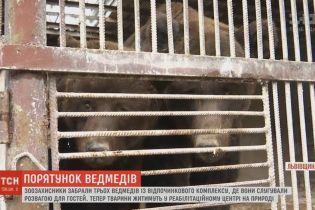 На базі відпочинку під Харковом пояснили, як працівниця примудрилася потрапити до клітки з ведмедями
