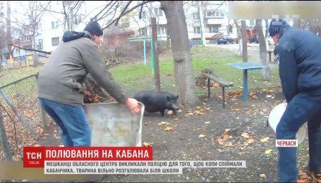 В Черкассах патрульные задержали кабана, который свободно разгуливал возле школы