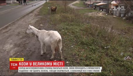 В спальном районе Киева козы стали причиной конфликта жителей многоэтажки и частного сектора