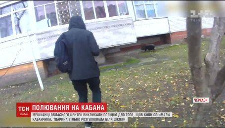 Патрульні у Черкасах спіймали кабана, який блукав поблизу школи