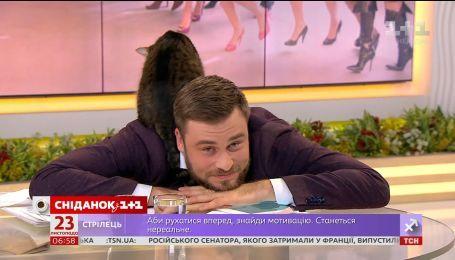 Общительный кот Честер ищет семью