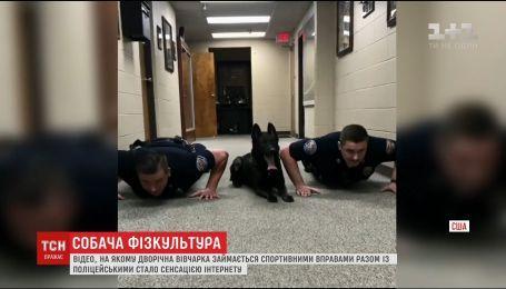 Американский пес покорил Интернет умением отжиматься вместе с офицерами