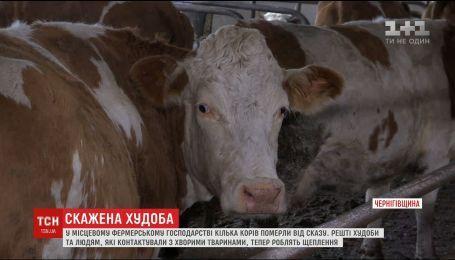 15 селян опинилися у лікарні через корів, у яких виявили сказ