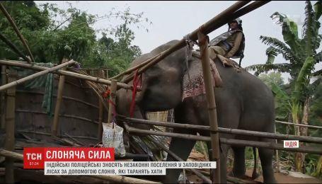 В Индонезии слонов начали использовать для сноса незаконных поселений