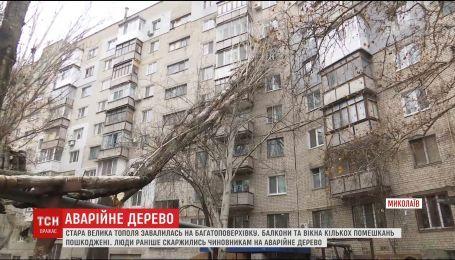 У Миколаєві величезне дерево обвалилось на житловий будинок