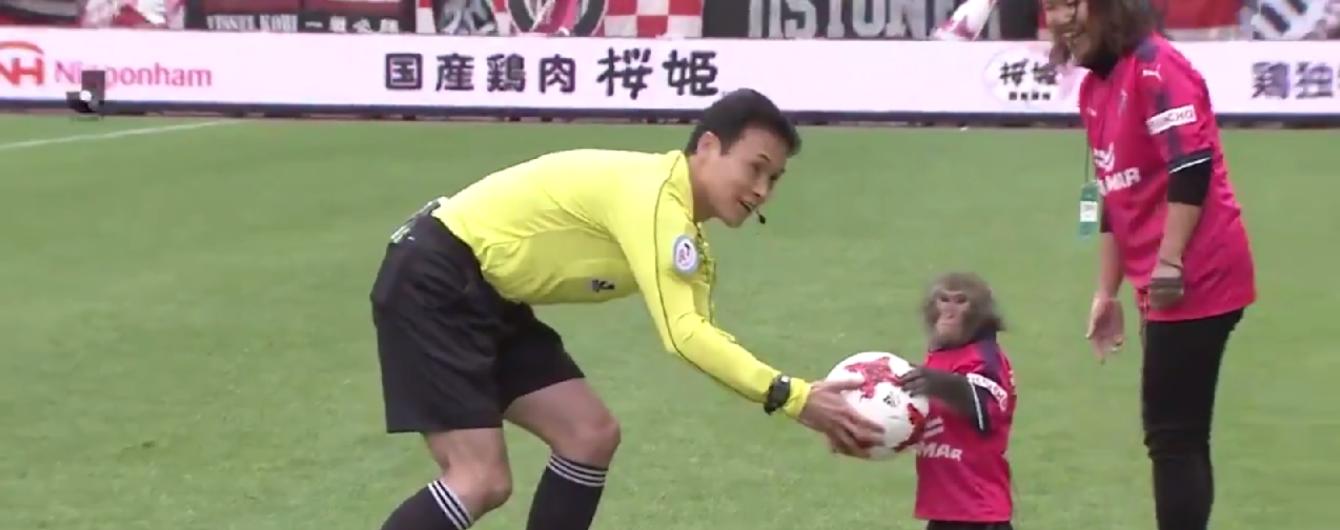 Обезьяна помогла провести матч чемпионата Японии