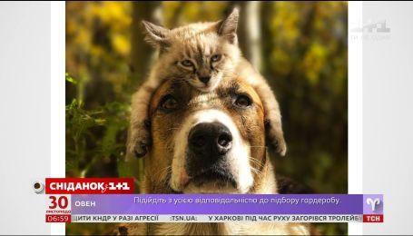 Кіт і пес, які мандрують разом, підкорили Інтернет