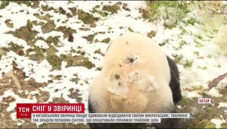 Смешное видео, как панды радовались снегу, взорвало Сеть