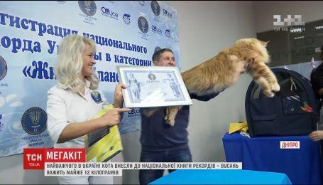 Самого большого кота Украины внесли в Национальную книгу рекордов