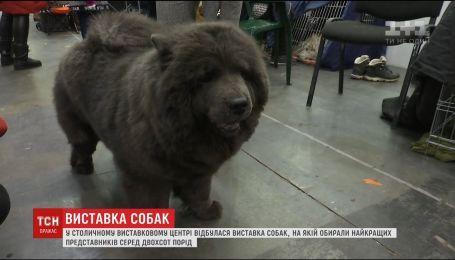 В Киеве выбрали самую красивую собаку