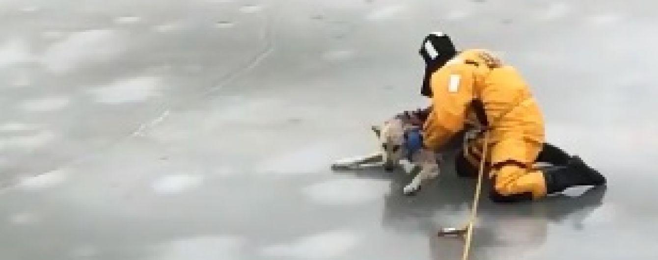 """Драматическое спасение собаки на льду и """"левитация"""" американской школьницы. Тренды Сети"""