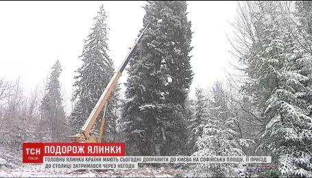 Главную елку страны должны доставить в Киев вечером