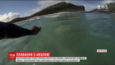 Австралийский серфер выжил после встречи с акулой
