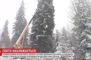 Главную елку Украины вторые сутки не могут доставить в Киев