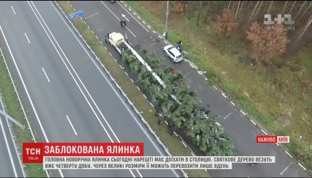 Главная елка страны снова задержалась по пути в столицу