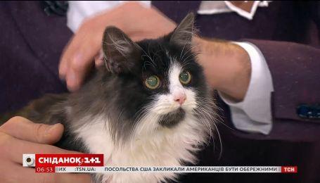 Котята Марси и Бьянка ищут дом