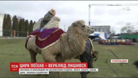 Мережу сколихнуло фото верблюда на засніженому стадіоні Тернопільщини