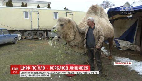 Верблюд на заснеженном стадионе в Тернопольщине возмутил соцсети