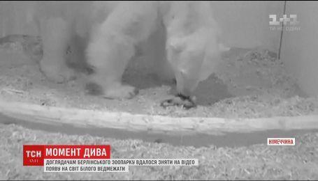 Доглядачам Берлінського зоопарку вдалося зняти на відео народження білого ведмежати