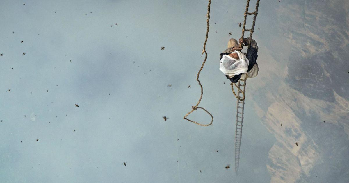 Непалець Мауле Дхан збирає мед на висоті 90 метрів.