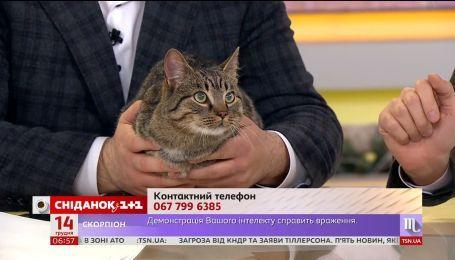 Кот Мурчик ищет новый дом