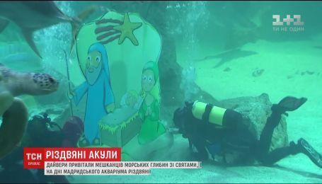 В Мадриде дайверы устроили праздничное поздравление для акул
