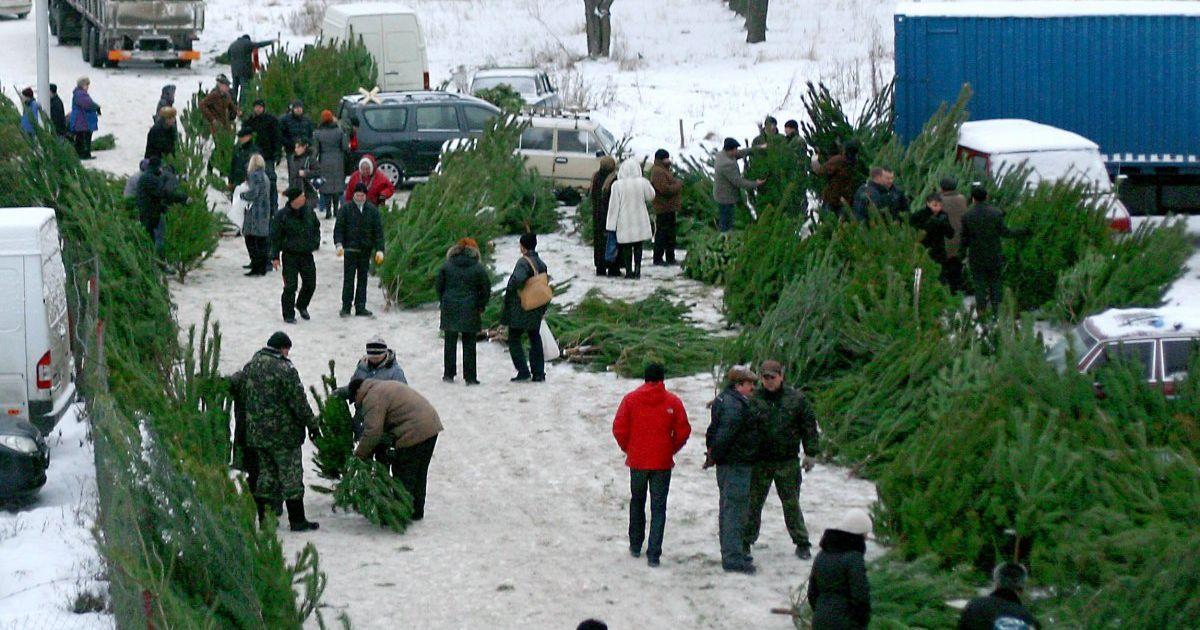 Елка с ароматом цитрусов и элитные деревья по 5 тысяч: чем поразил покупателей первый день продаж новогодних красавиц