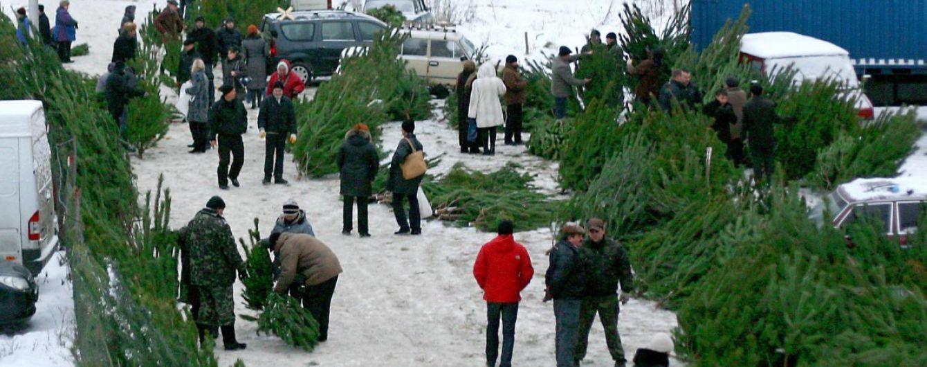 В Украине начинают продавать живые елки к новогодним праздникам