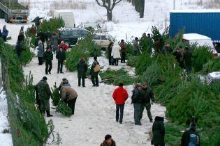 В Україні починають продавати живі ялинки до новорічних свят