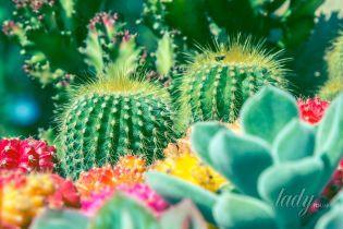 """Растения для дома – """"счастливые"""" и """"несчастливые"""""""