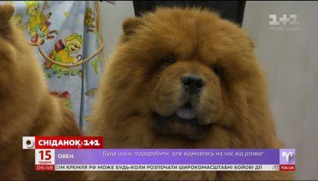 Символ 2018: украинцы стали чаще покупать собак
