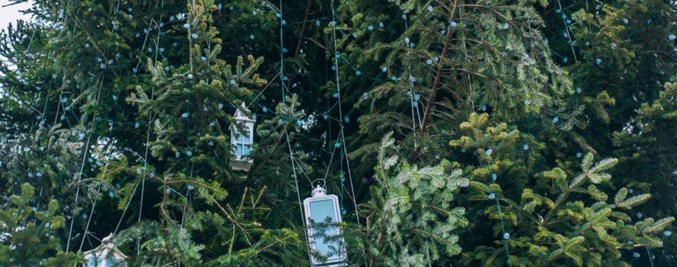 Стало известно, во сколько обойдется главная новогодняя елка Украины