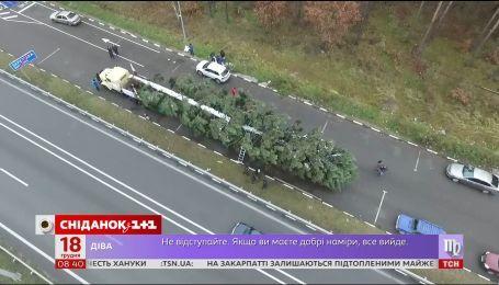 Из Прикарпатья в Киев с препятствиями: как добиралась в столицу главная елка страны