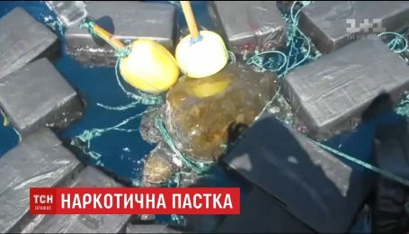 Береговая охрана США освободила черепаху, которая запуталась в пакетах с кокаином