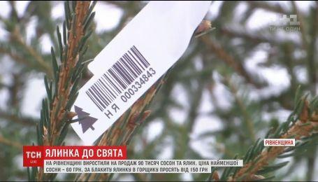 На Рівненщині підготували на продаж понад 90 тисяч ялинок та сосон