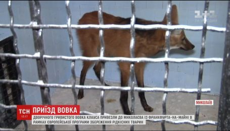 В украинский зоопарк доставили хищника, занесенного в Международную Красную книгу