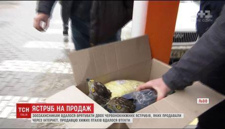 Львовские зоозащитники устроили засаду, чтобы спасти краснокнижных ястребов