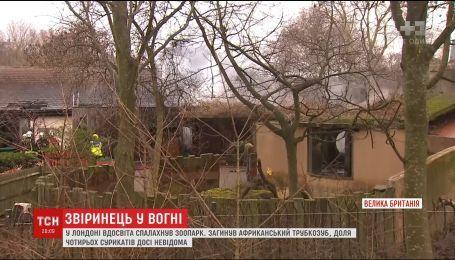 В лондонском зоопарке произошел пожар, погибли животные