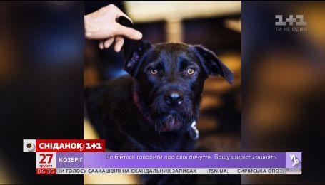 Какие собаки живут у мировых политиков