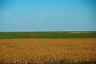На Тернопольщине после обработки полей массово отравились селяне